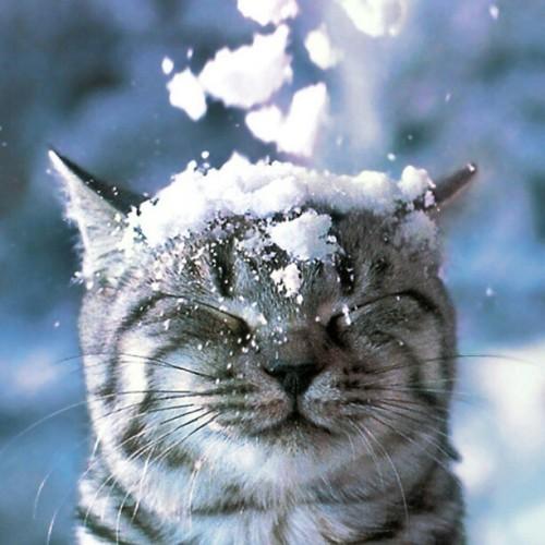 Cat-snow-cute
